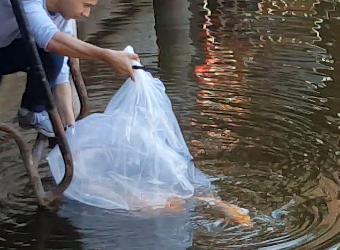Две пары золотых китайских карпов пополнили рыбную фауну внутреннего пруда Колотиловки. Жавохир Абдурасулов помог рыбам выйти на волю