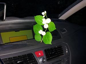 Привычка? Дарить цветы?