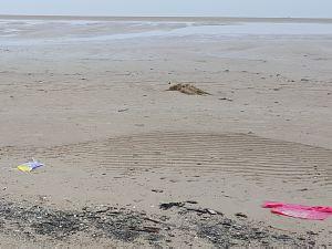 Пластиковый мусор на побережье Юрмалы тоже есть